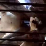 【ゲイ動画】アジアのハメ撮り素人セックス! 筋肉マッチョイケメン二人が自撮りしながら様々な角度でデカチンをハメまくり!